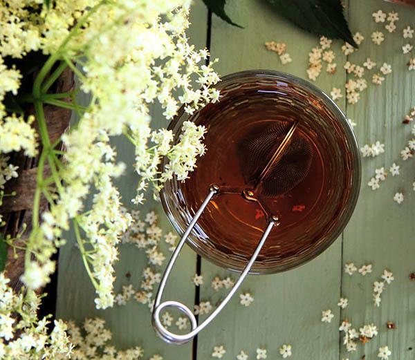 propiedades medicinales del saúco