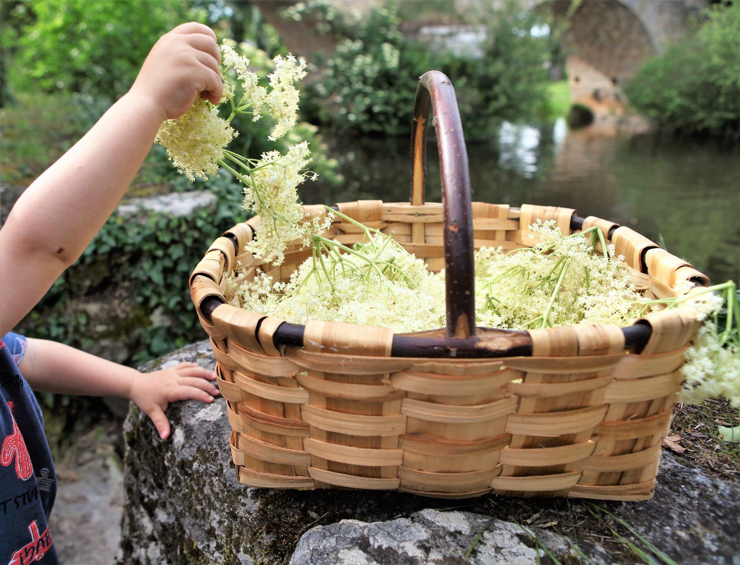 Recetas de flor de saúco
